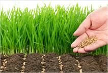 Газонные травы: что выбрать?