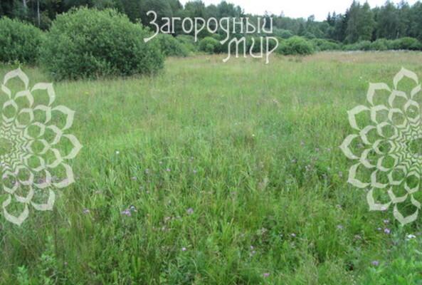 Московская область, Одинцовский г.о., Никифоровское